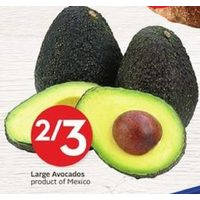 Large Avocados