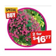 Home Depot: $8 Off Proven Winner Hanging Basket or Planter