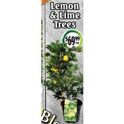 Lemon & Lime Trees  - $69.99