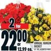 Annual Hanging Basket - 2/$22.00
